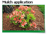 Application of mulch